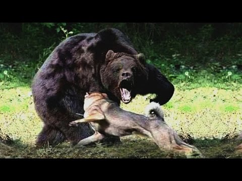 Predators in the Animal Kingdom National Geographic Documentary