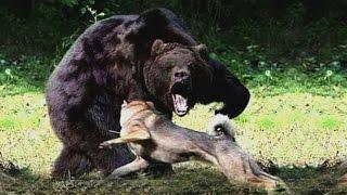 Predators in the Animal Kingdom National Geographic Documentary