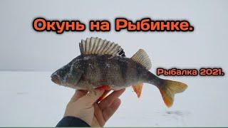 Ловля окуня на Рыбинском море на балансиры Крупный окунь на Рыбинке зимой Рыбалка 2021