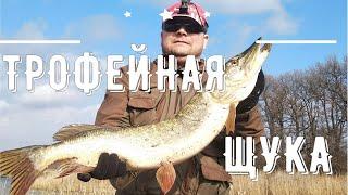 Как Поймать Трофейную Щуку Рыбалка на Джиг с Берега Рыбалка в Липецкой Области на Реке Воронеж