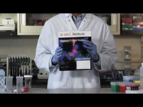 Stellaris RNA Fluorescence In Situ Hybridization (FISH) Probes Full Video