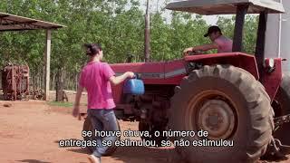 Seringueiras (Documentário)