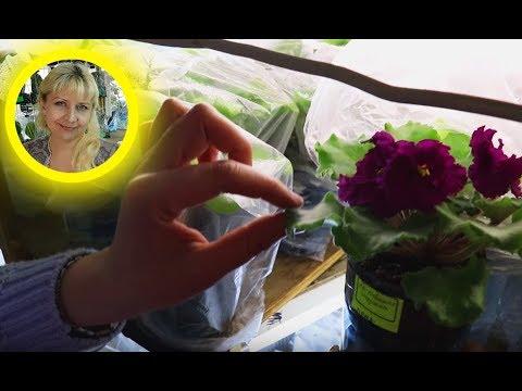 Вопрос: Скоро отпуск 2 недели, как оставить цветы на 2 недели без полива?