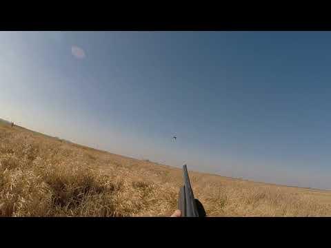 South Dakota Pheasant
