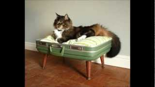 Creative,space Saver,money Saving Furniture For Cat/dog Owners (handmade)
