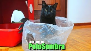 LO MEJOR DE PeloSombra