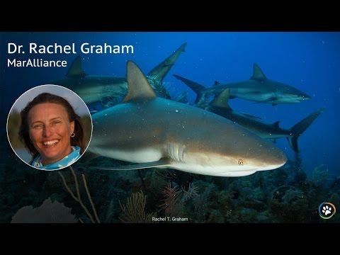 MarAlliance · Dr. Rachel Graham · SF Expo 2016