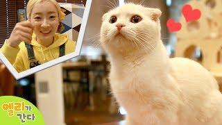 [엘리가 간다] 야옹야옹~꼬마캐빈과 함께 고양이 카페에 놀러가다 l 엘리앤 투어