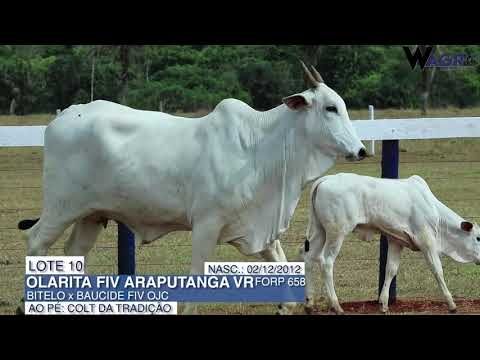 LOTE 10   FORP 658