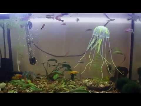 Посылка из Китая 'Медуза в аквариум'