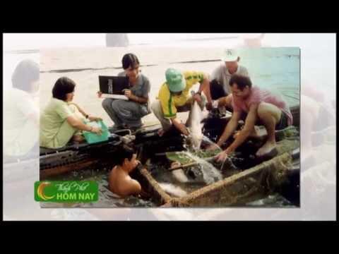 Bao tử cá ba sa tẩm bột chiên dòn - Thành Phố Hôm Nay [HTV9 -- 21.07.2014]
