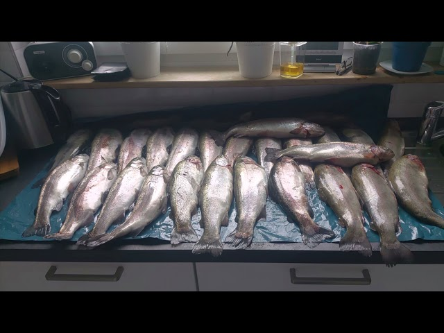Ihmsen - Der Forellengott Forellensee Rosenweiher Ordentliche Fischparty