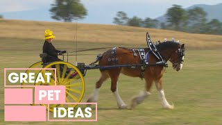 Dr Harry Shows You How to Care for Heavy Horse Breeds | PETS | Great Home Ideas