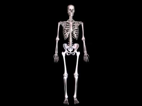 human skeleton 3d animation - youtube, Skeleton