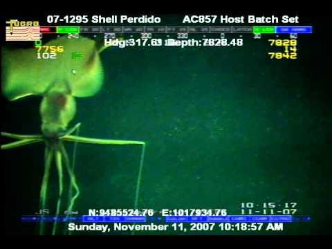 Deep Sea Creature found near undersea drill