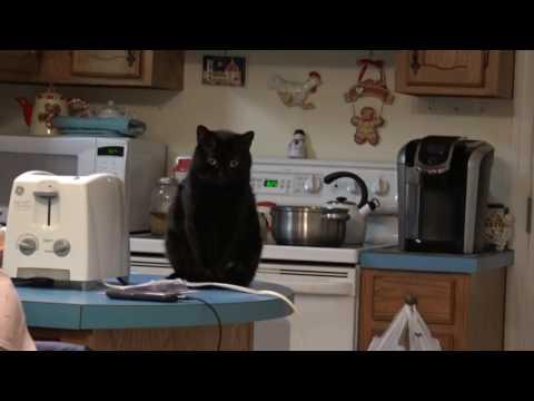 Sony FDR AX33 test   kitty cats 720p