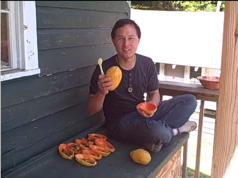 Best Raw Food Event of 2012 - WoodStock Fruit Festival Review