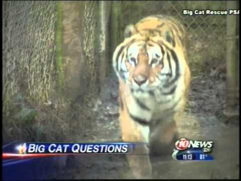 Big Cat Rescue on Tampa News 10