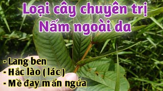 Bài thuốc trị Lang ben, hắc lào ( lác ), mề đay mẩn ngứa, nấm ngoài da.PHAN HẢI channel.