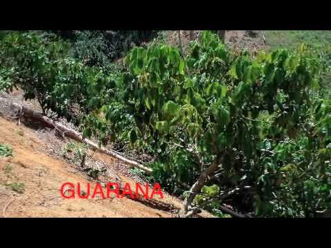 FARM FOR SALE IN BRAZIL