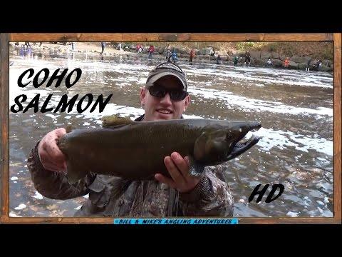 JIGGING COHO SALMON - On The DAM