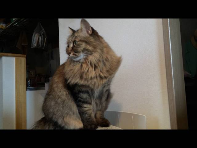 風を受ける猫