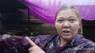 закупка нутрий в хозяйстве Ирины 7 сентября 2018 г.