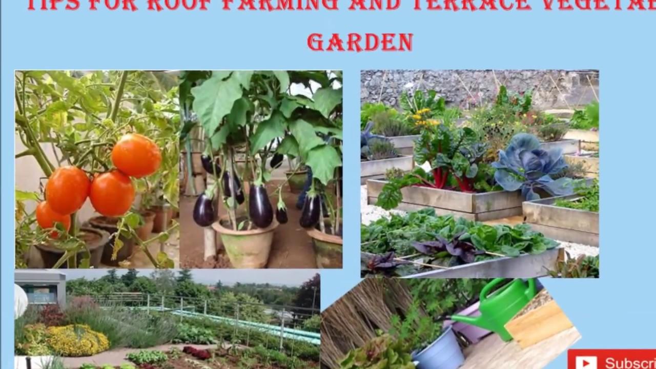 Tips For Roof Farming Terrace Vegetable Gardening Youtube