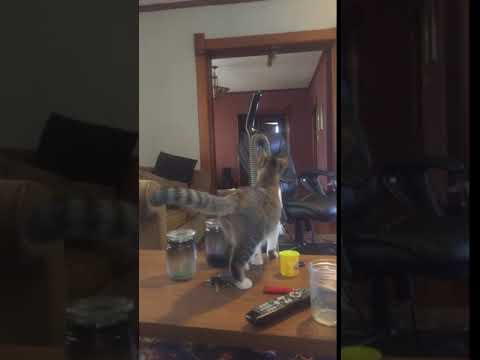 Joey Brooks - Cat Accidentally Turns on Vacuum and Gets Scared