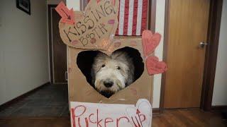 Old English Sheepdog KISSING BOOTH┃DIY Dog Costume EASY┃Ed&Mel