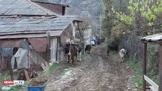 Սյունիքի մարզի Դավիթ Բեկ գյուղի արոտավայրերը մնացել են թշնամու վերահսկողության տակ