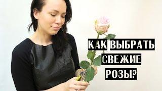 как правильно выбрать розу?
