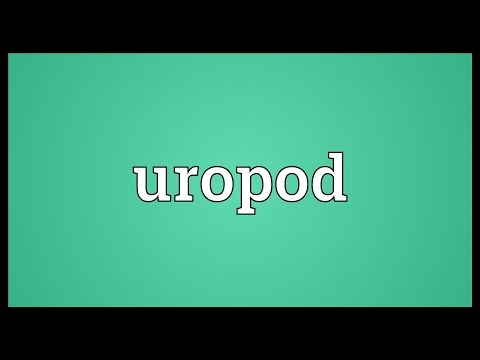 Header of uropod