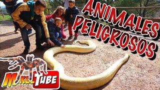 Animales Peligrosos - Visitamos una granja con animales de todo tipo.