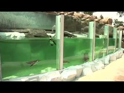 Pingüinos en zoológico La Aurora