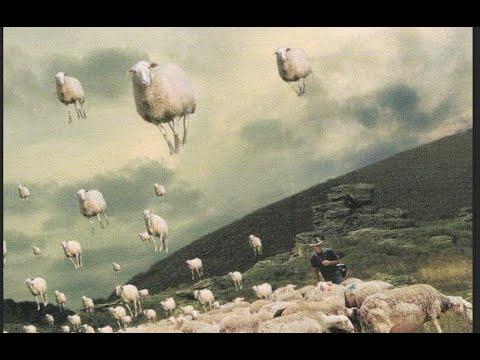 PINK FLOYD Sheep (film clips and lyrics)