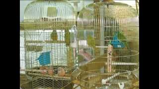 Все О Домашних Животных: Дети Про Птиц