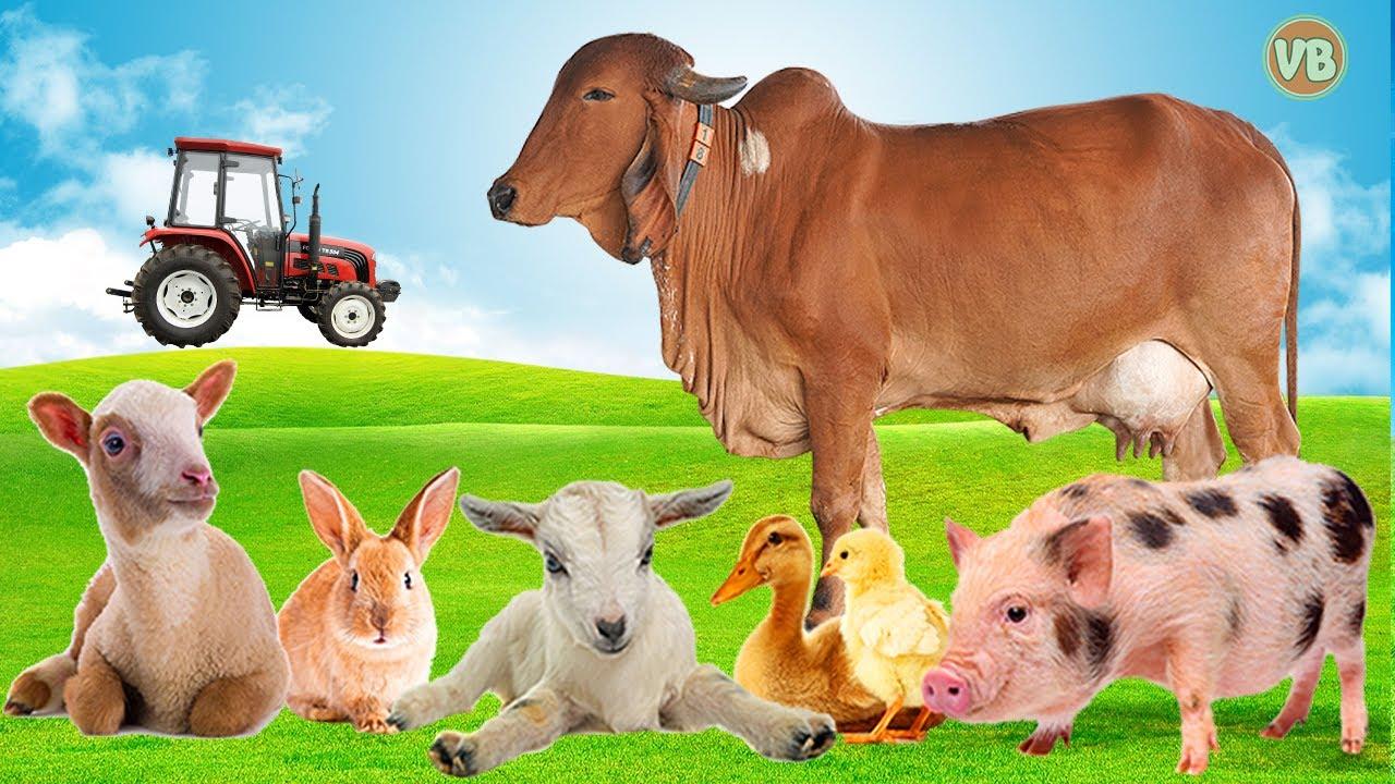 Fatos Sobre Animais da Fazenda, Boi, Cavalo, Porco, Pato, O Som dos Animais
