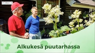 Näin kasvatat valkosipulia ja tomaatteja