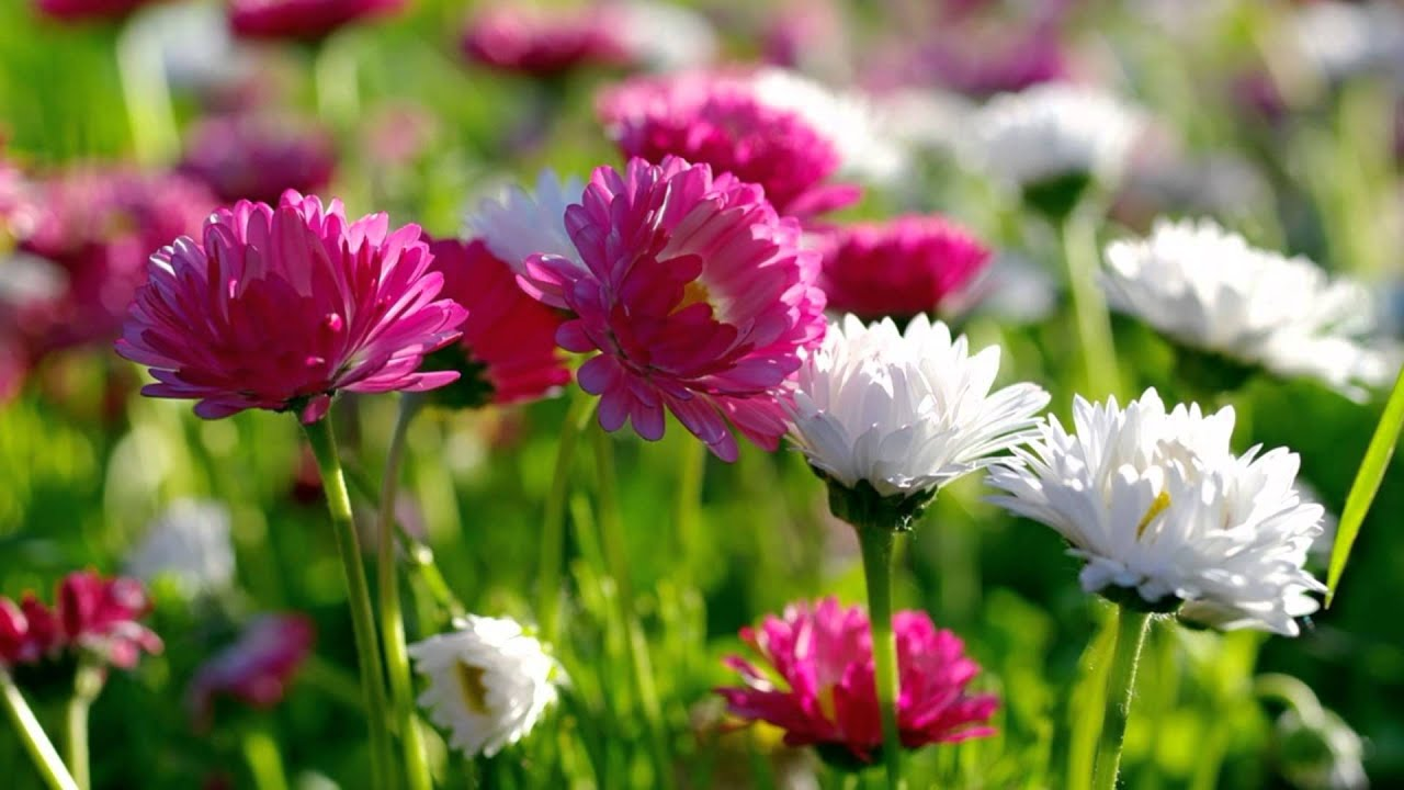 the most beautiful flowers  flower, Natural flower