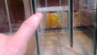 Diy Aquariums: Revised Sump Build Q & A