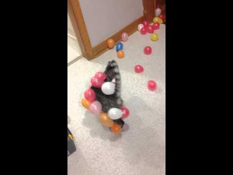 Statisch aufgeladene Katze spielt mit Luftballons