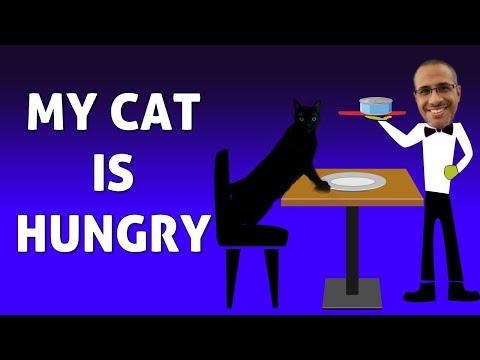 My Cat Is Hungry | Magic Cat Tricks