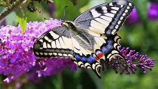Butterflies and Flowers - 1 Hour Nature Meditation with Soothing Music(Ho creato questo video con l'Editor video di YouTube (http://www.youtube.com/editor)////////////////////////////////////////////////////////////////////////////////////////////////////////..., 2014-02-27T11:14:44.000Z)
