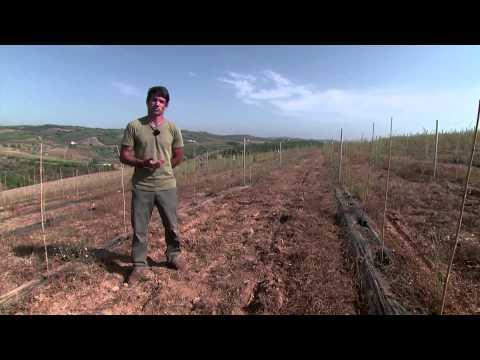 Bagas Goji: O superalimento