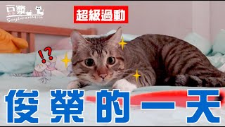 【SoybeanMilk Cat】 The day of hyperactive boy Jun Rong catㄅ