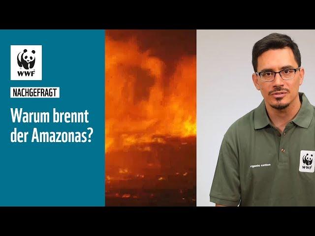 Warum brennt der Amazonas? Wie schlimm sind die Feuer?   #nachgefragt   WWF Deutschland