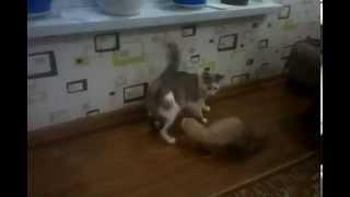 Хорек дерет кошку. Ржака. Смотреть всем