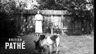 Canine Obedience (1937)