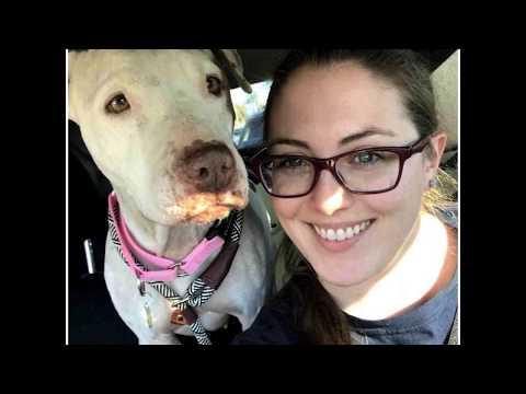 Phoenix AZ - Bull Terrier American Bulldog Mix For Adoption